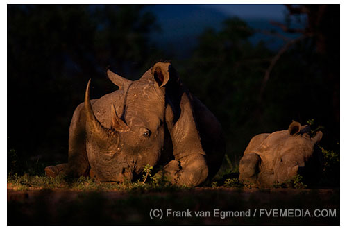 Peaceful Night GDT european wildlife photographer of the year 2012 quarter finalist
