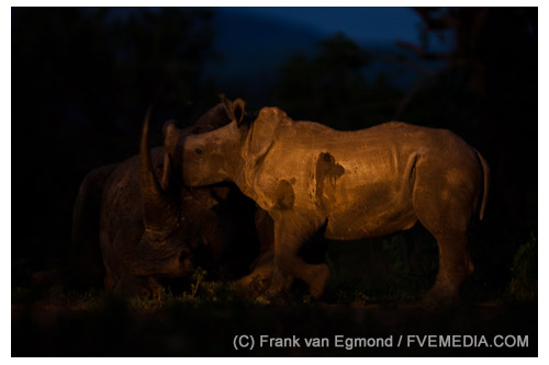 White Rhinoceros mother and calf at Imfolozi